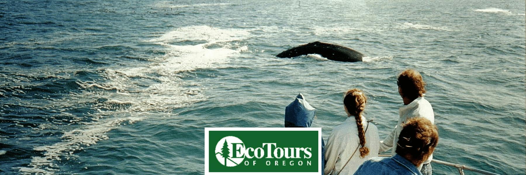 Best Whale Watching Tour Oregon Coast