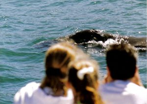 Whale Watching - Eco Tours of Oregon