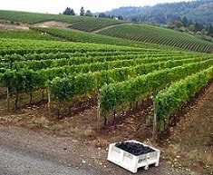 Winery Tours - Portland