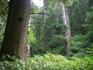 Northern Oregon Tours - Old Growth Forest