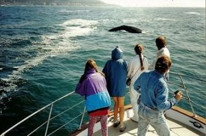 Washington whale Watching Tour