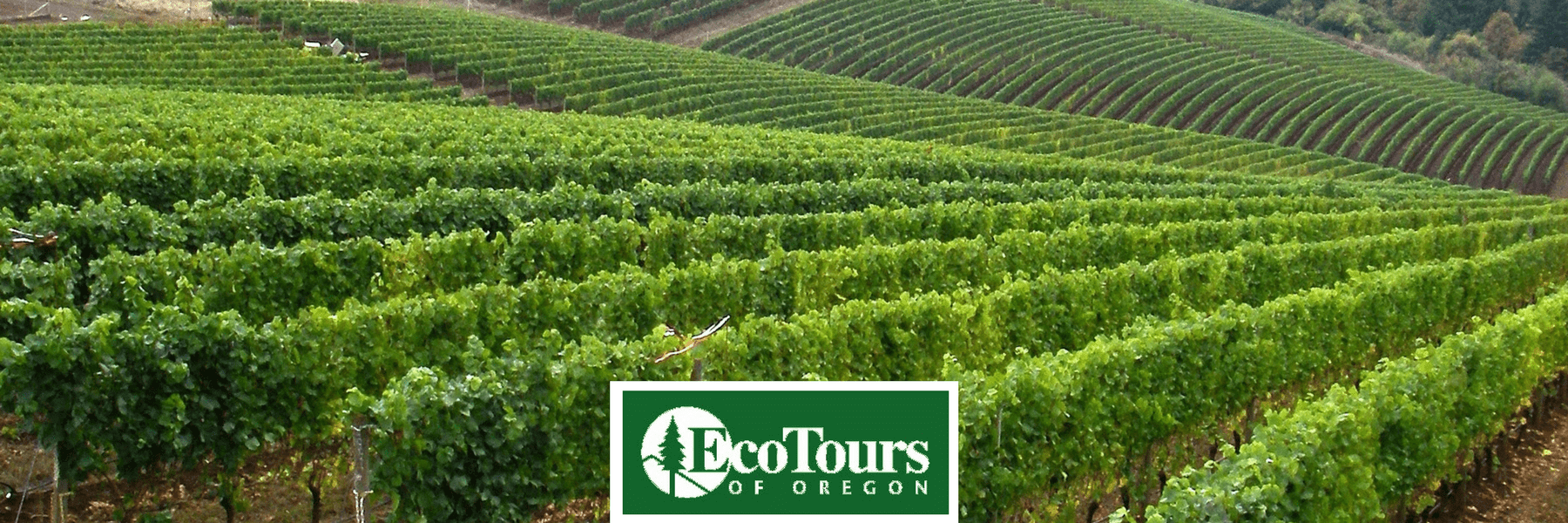 Winery Tour in the Willamette Valley Countryside - EcoTours of Oregon